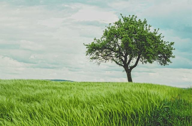 strom na poli.jpg