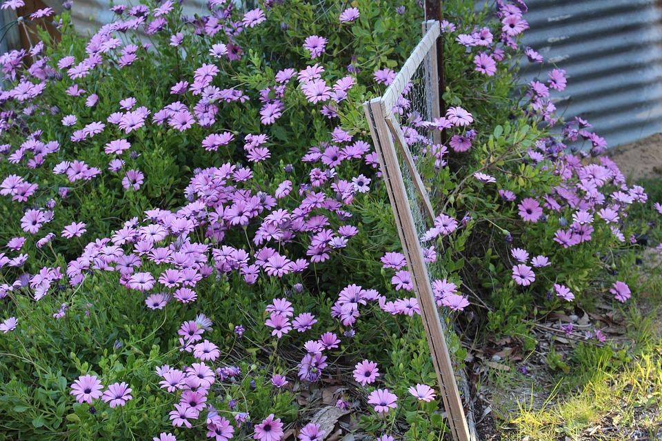 květiny u domu