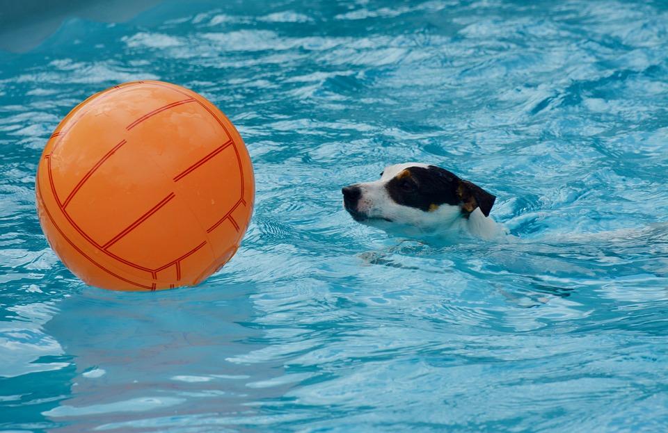 pes s míčem ve vodě